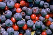 manganese foods