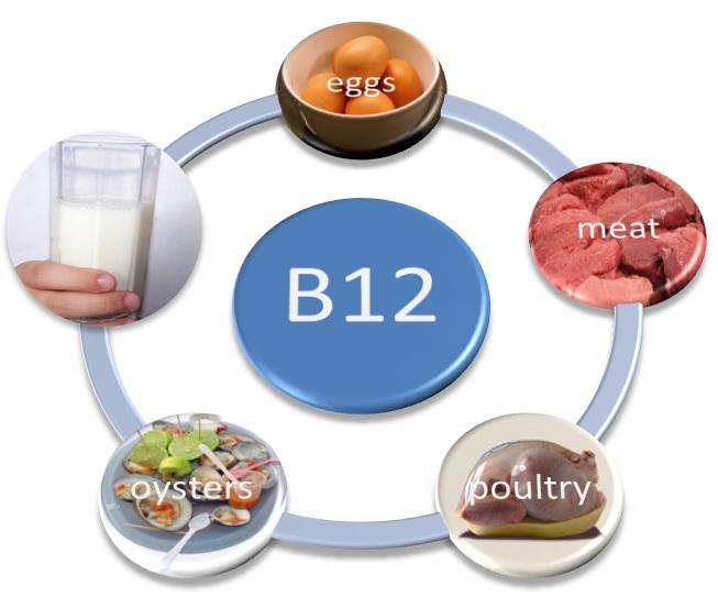 vitamin B12 foods