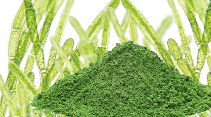 chlorella health benefits