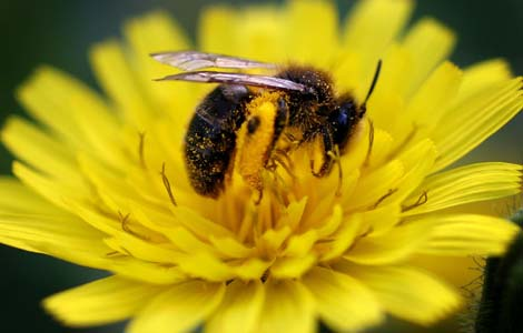 hay fever natural remedies